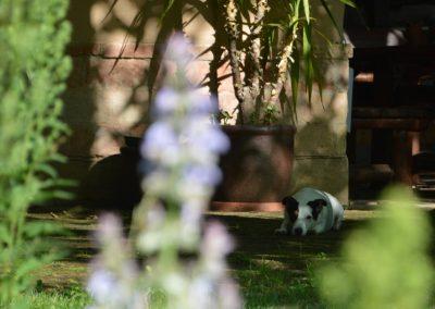 Kora nyári hangulat a mecseki szálllás kertjében