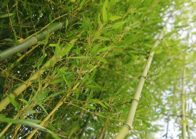 Bambuszliget a kertben